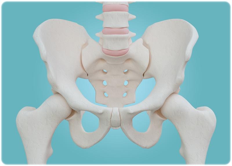骨盤を立てるストレッチが効果的な2つの理由