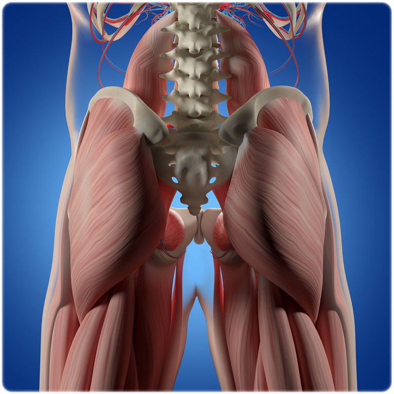 骨盤後傾 腸腰筋 ハムストリングス 筋肉