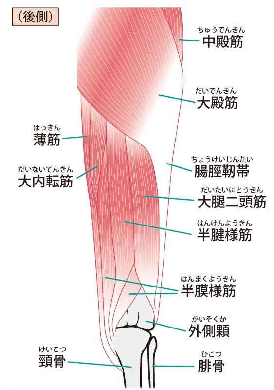 股関節回りの筋肉②