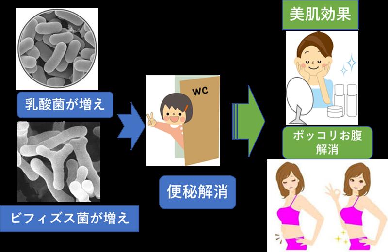 腸内フローラサプリの効果
